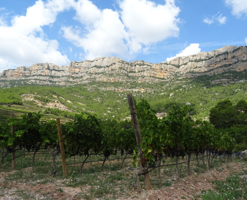 vinyes escaladei montsant
